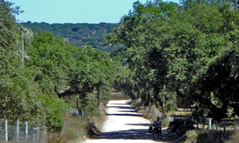 Gravel road lined with trees in Alentejo, Portugal