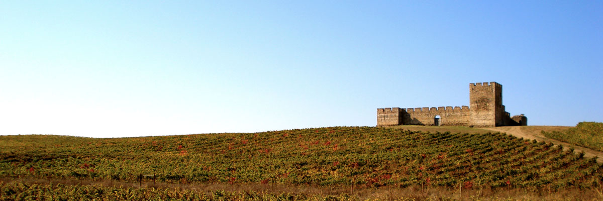 Medieval Castle on top of small hill, overlooking vineyards
