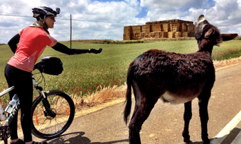 Cyclist with donkey on the Camino de Santiago, Spain