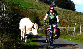 Wild life and Cyclist on Camino de Santiago, Spain