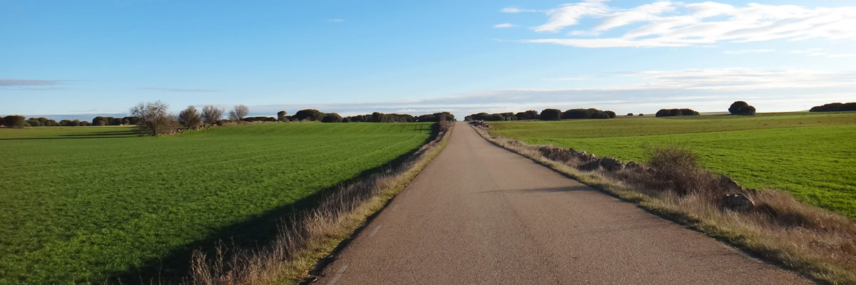 Road on the Camino de Santiago through the vast plains
