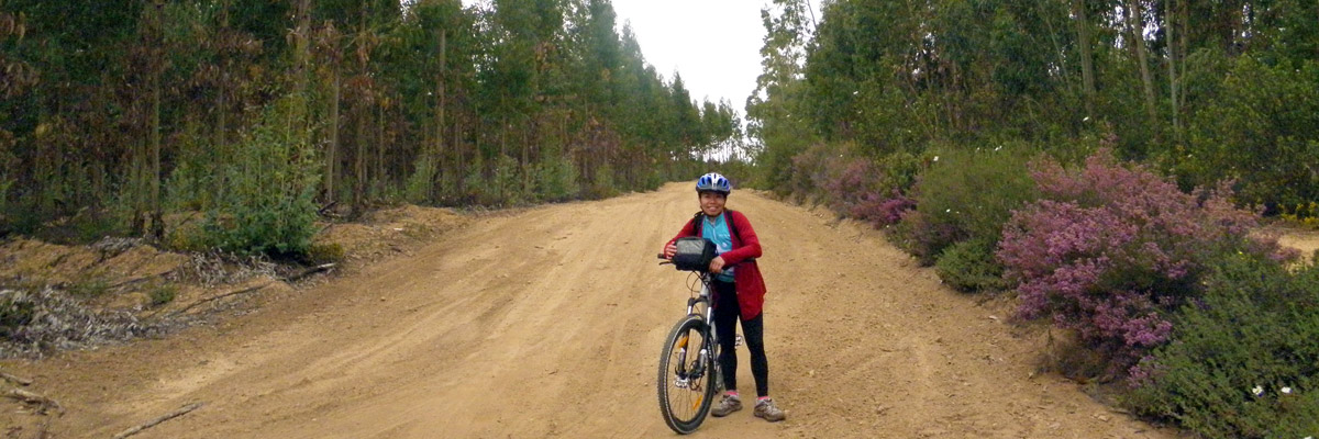Mountain Biker on a gravel road surrounded by colourful bushes and eucalyptus