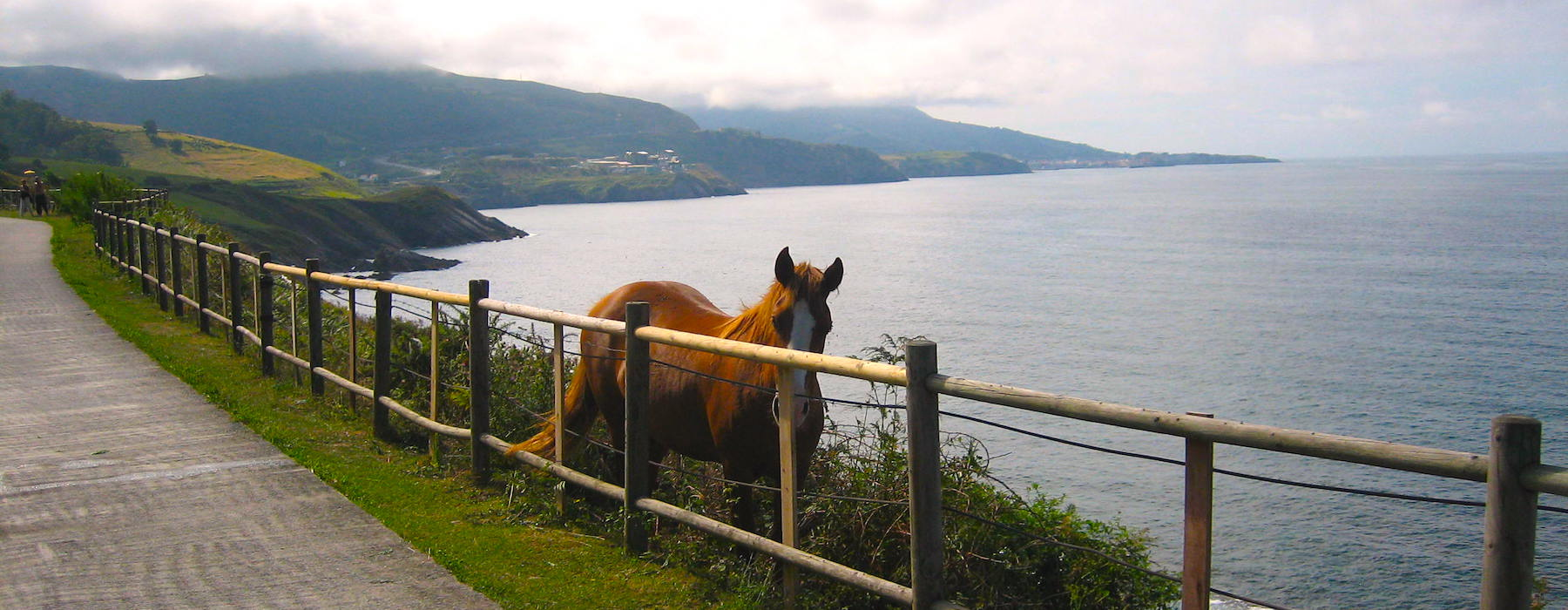 Horse in Spain Basque Country